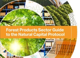 Forest Products Sector Guide and Case Studies