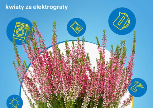 Castorama Z Akcja Kwiaty Za Elektrograty Forum Odpowiedzialnego Biznesu